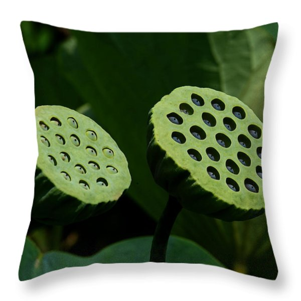 Lotus Capsules-sun Worshipers Dl052 Throw Pillow by Gerry Gantt