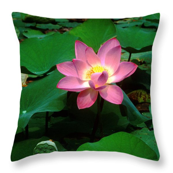 Lotus Flower and Capsule 24A Throw Pillow by Gerry Gantt