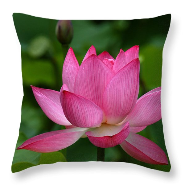 Lotus--Shades of Past and Future DL029 Throw Pillow by Gerry Gantt