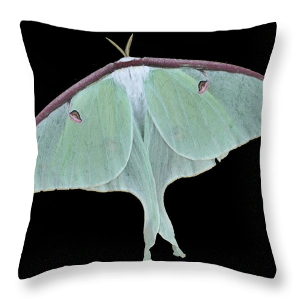 Luna Moth Throw Pillow by Paul Ward