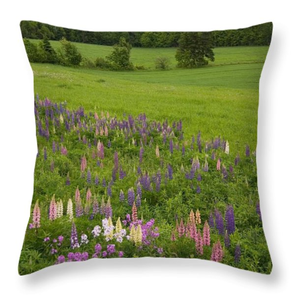 Lupines Grow In Front Of Hay Fields Throw Pillow by Taylor S. Kennedy