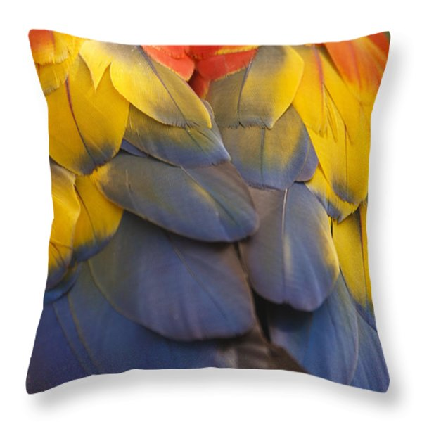 Macaw Parrot Plumes Throw Pillow by Adam Romanowicz