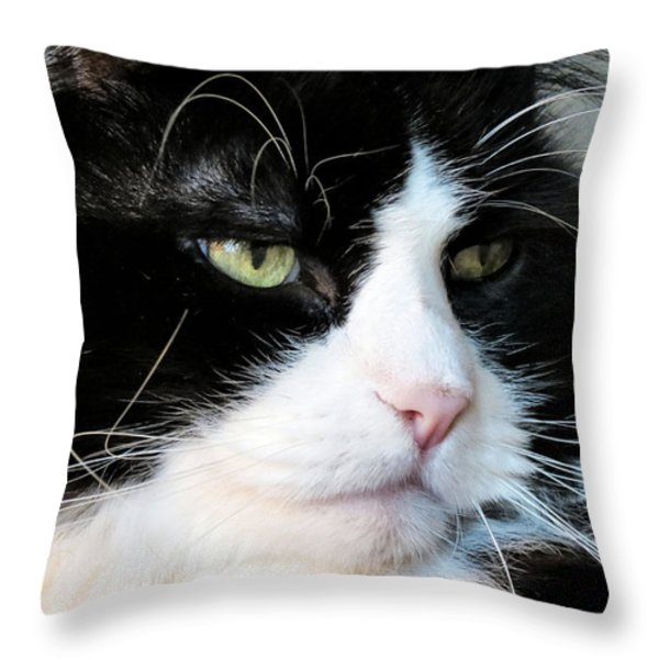Maine Coon Face Throw Pillow by Michelle Milano