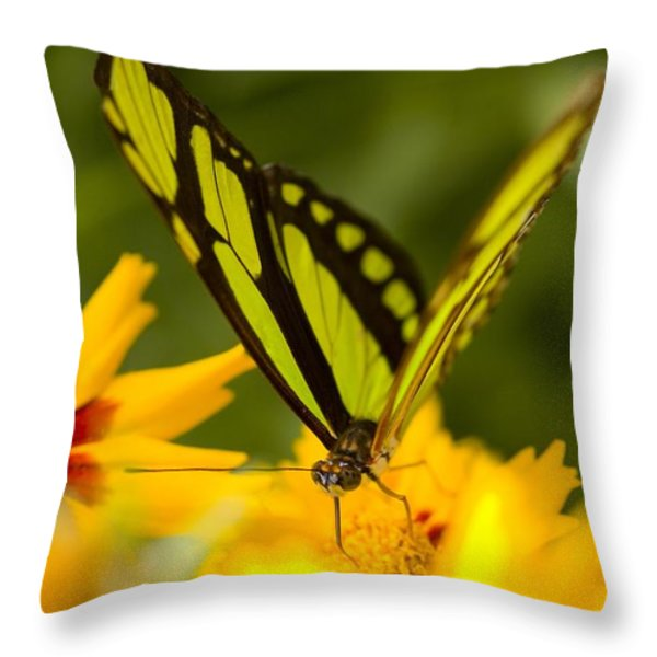 Malachite Butterfly On Flower Throw Pillow by Craig Tuttle