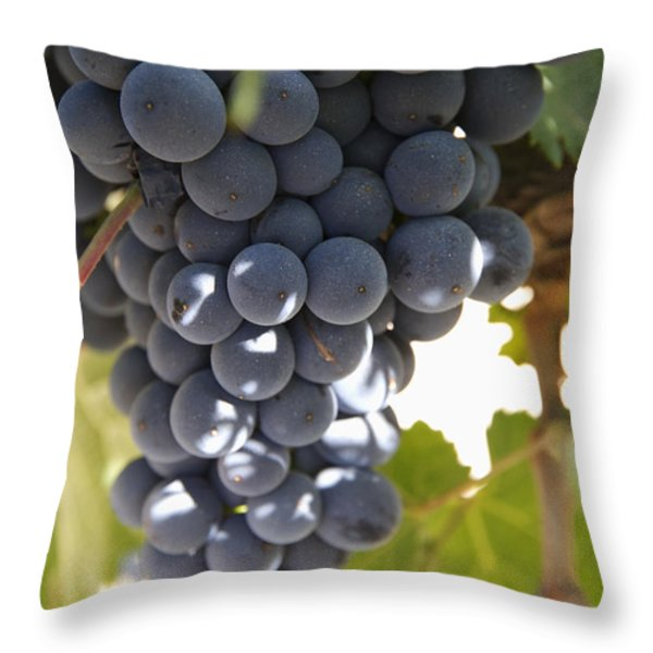 Malbec Grapes On The Vine Throw Pillow by Peter Langer