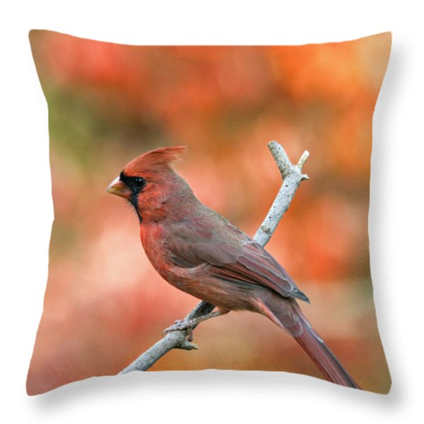 Male Northern Cardinal - D007810 Throw Pillow by Daniel Dempster