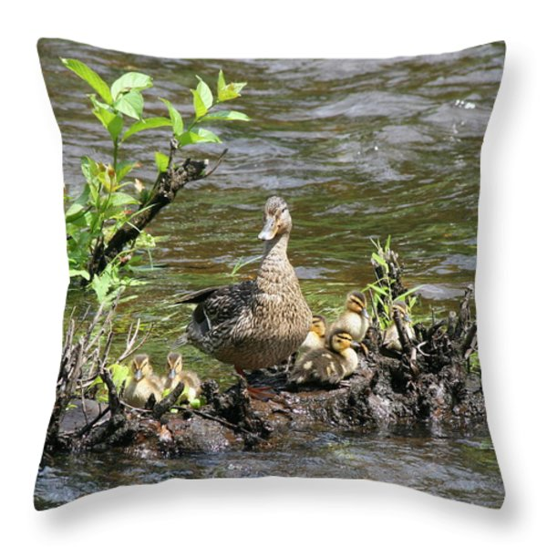 Mallard Duckling Rest  Throw Pillow by Neal  Eslinger