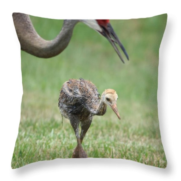 Mama and Juvenile Sandhill Crane Throw Pillow by Carol Groenen