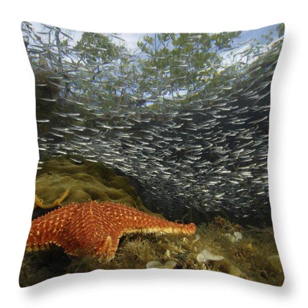 Mangrove Root Habitats Provide Shelter Throw Pillow by Tim Laman
