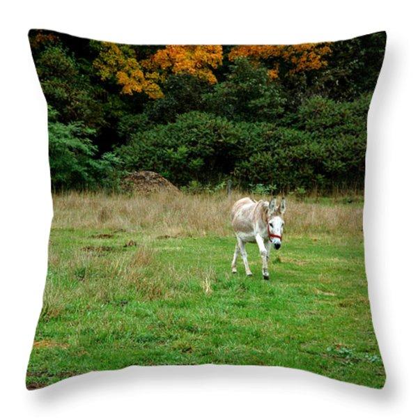 Marys Donkey Throw Pillow by LeeAnn McLaneGoetz McLaneGoetzStudioLLCcom
