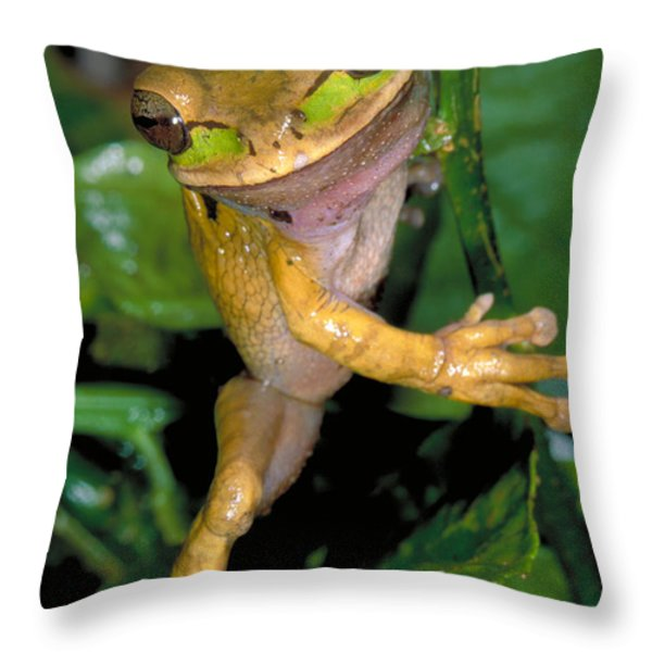 Masked Treefrog Throw Pillow by Gregory G. Dimijian