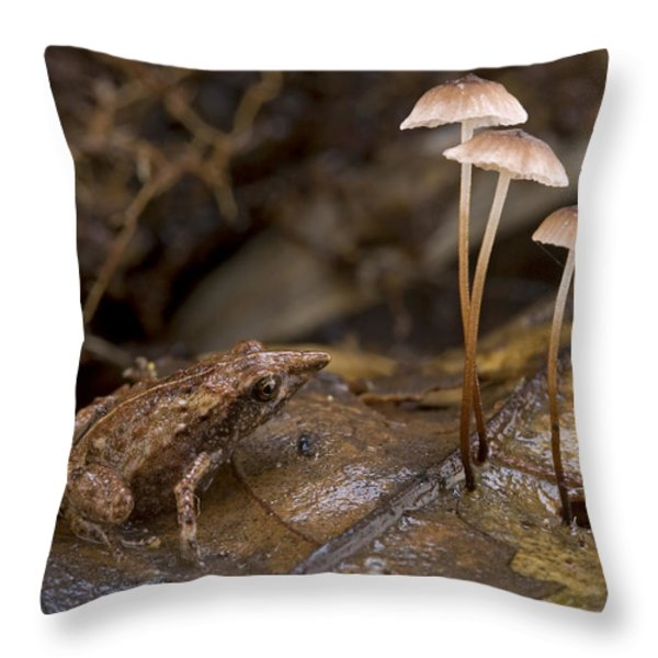 Microhylid Frog Papua New Guinea Throw Pillow by Piotr Naskrecki