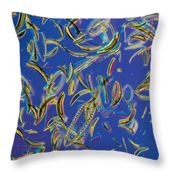 Microscopic View Of Diatoms Throw Pillow by Darlyne A. Murawski