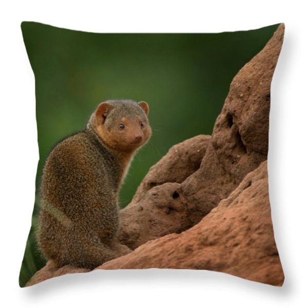 Mini Mongoose Throw Pillow by Joseph G Holland