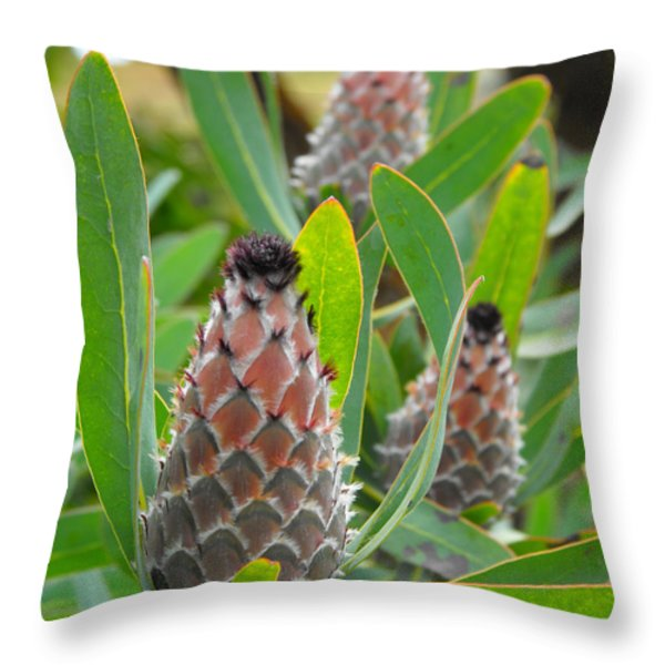 Mink Protea Flower Throw Pillow by Rebecca Margraf