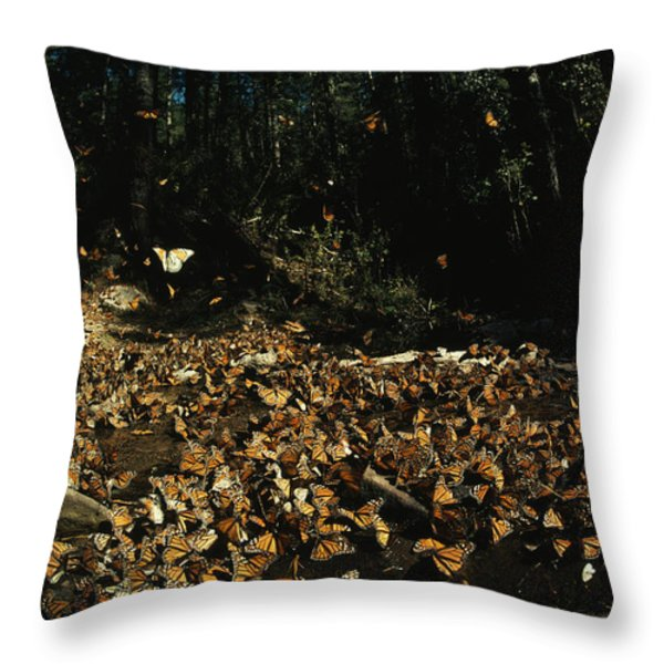 Monarch Butterflies Draw Water, A Sign Throw Pillow by Bianca Lavies