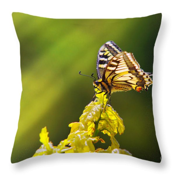 Monarch Butterfly Throw Pillow by Carlos Caetano