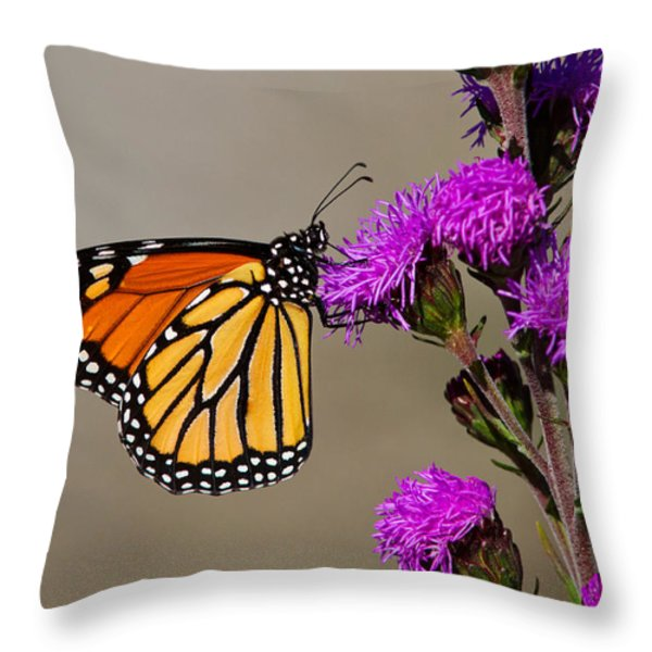 Monarch Throw Pillow by Mircea Costina Photography