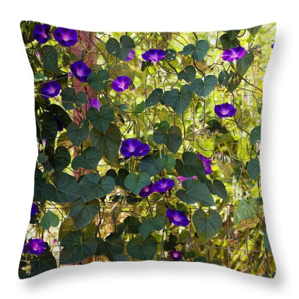 Morning Glories Throw Pillow by Margie Hurwich