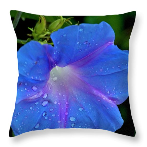 Morning Glory Dew Throw Pillow by Dennis Reagan