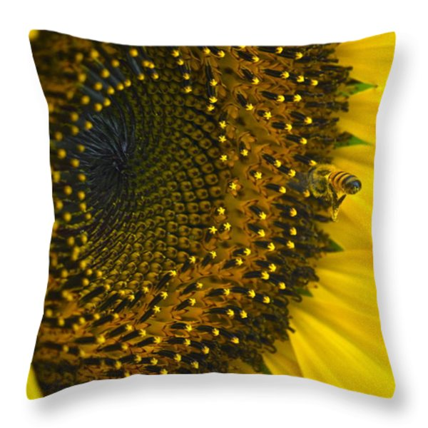 Morning Is The Best Throw Pillow by Gwyn Newcombe