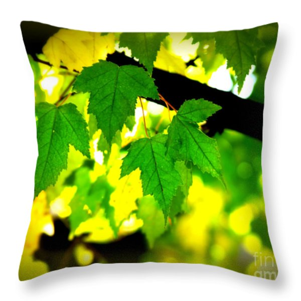 Morning  Light Throw Pillow by Perry Webster