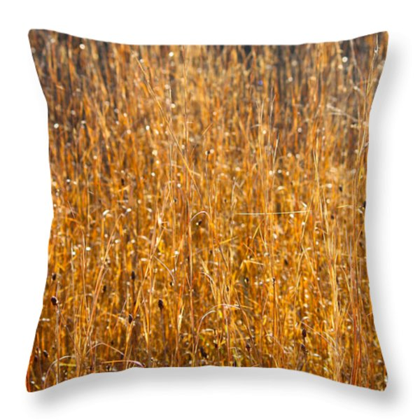 Morning Sunshine On The Marsh Throw Pillow by Carol Groenen