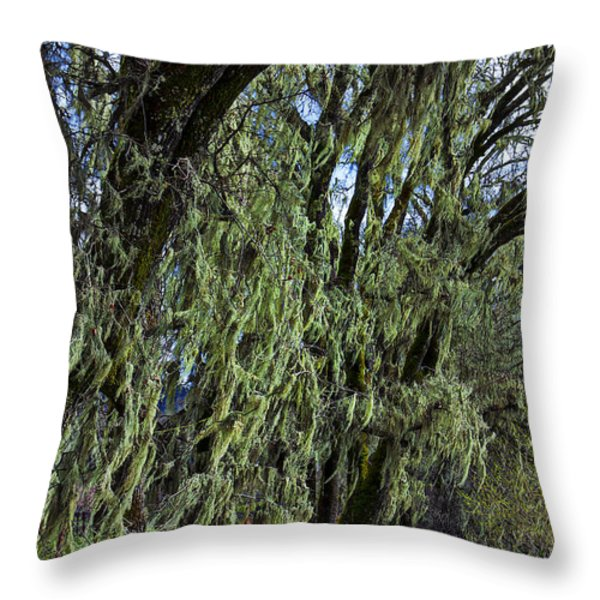 Moss Covered Trees Throw Pillow by Garry Gay