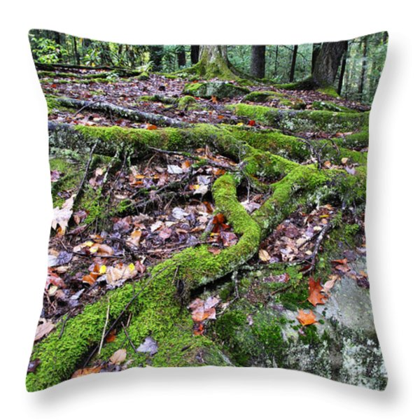Moss Tree Roots Fall Color Throw Pillow by Thomas R Fletcher