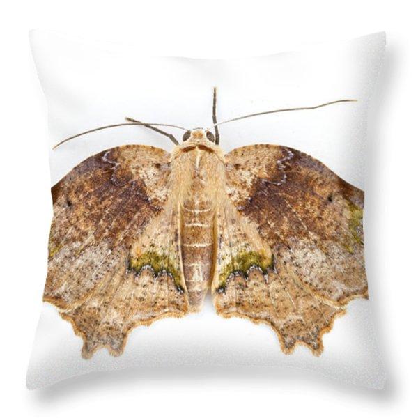 Moth Braulio Carrillo Np Costa Rica Throw Pillow by Piotr Naskrecki