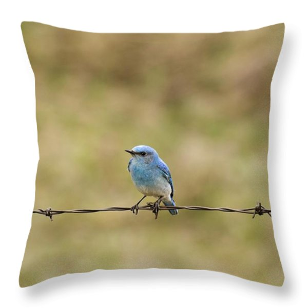 Mountain Bluebird On A Fence Wire Throw Pillow by Philippe Widling