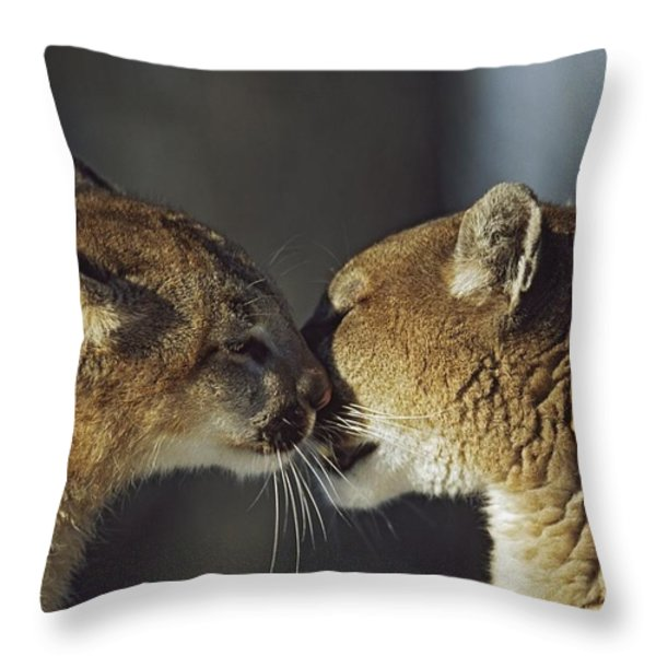 Mountain Lion Felis Concolor Cub Throw Pillow by David Ponton