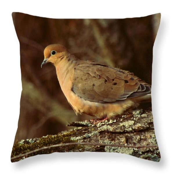 Mourning Dove at Dusk Throw Pillow by Amy Tyler