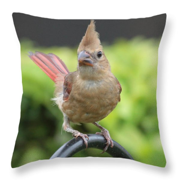 Mrs Cardinal Throw Pillow by Carol Groenen