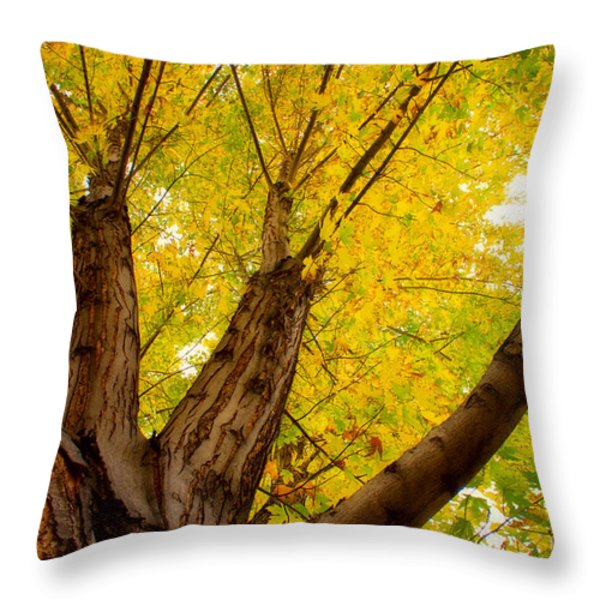 My Maple Tree Throw Pillow by James BO  Insogna