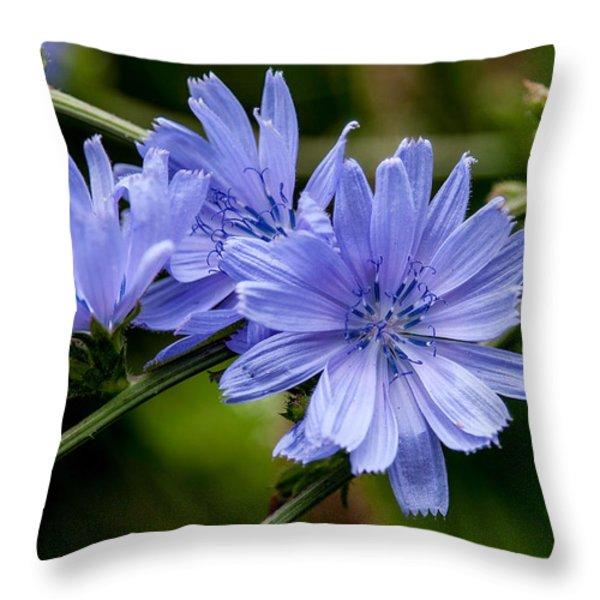 Natures Beautiful Blue Chicory Flowers Throw Pillow by John Haldane