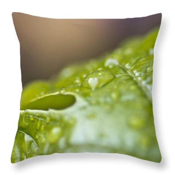New Beginnings Throw Pillow by Priya Ghose