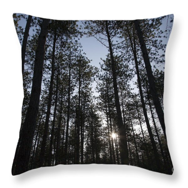 New England Red Pine Forest Throw Pillow by Erin Paul Donovan