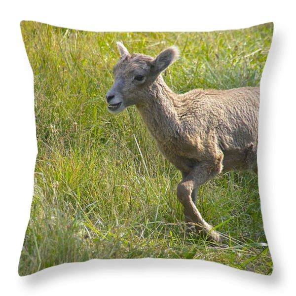 Newborn Bighorn Throw Pillow by Sean Griffin