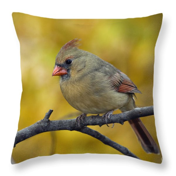 Northern Cardinal Female - D007849-1 Throw Pillow by Daniel Dempster