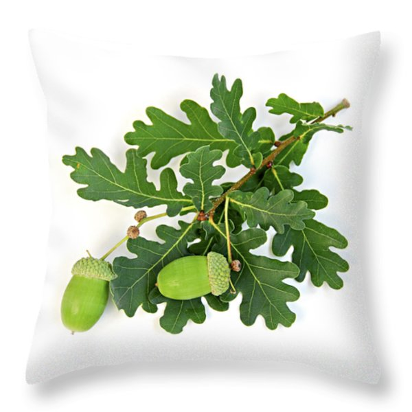 Oak branch with acorns Throw Pillow by Elena Elisseeva