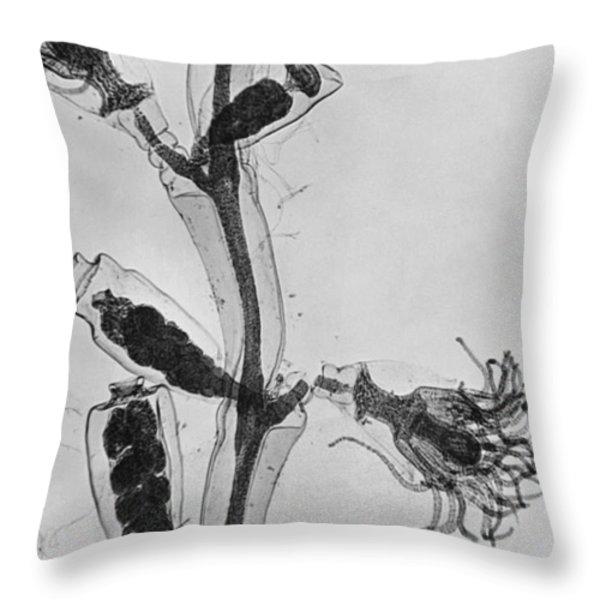 Obelia Throw Pillow by Omikron