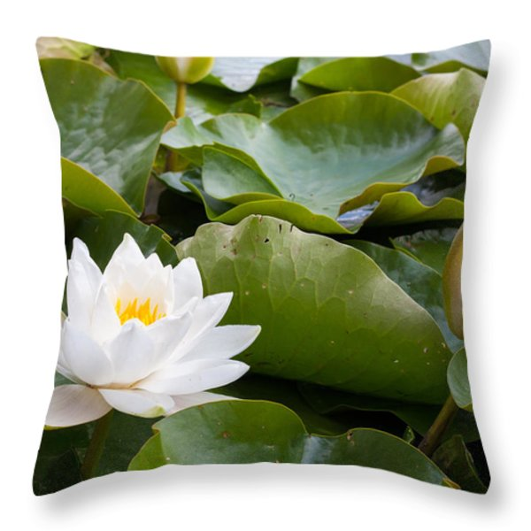 Open And Closed Water Lily Throw Pillow by Semmick Photo