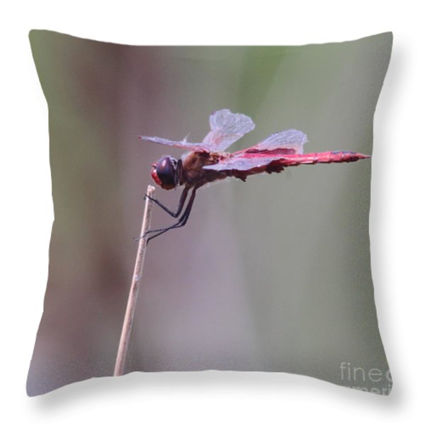 Open Mic Night At The Swamp Throw Pillow by Robert Frederick