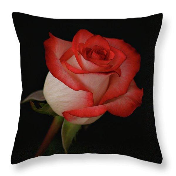 Orange and White Rose Throw Pillow by Sandy Keeton