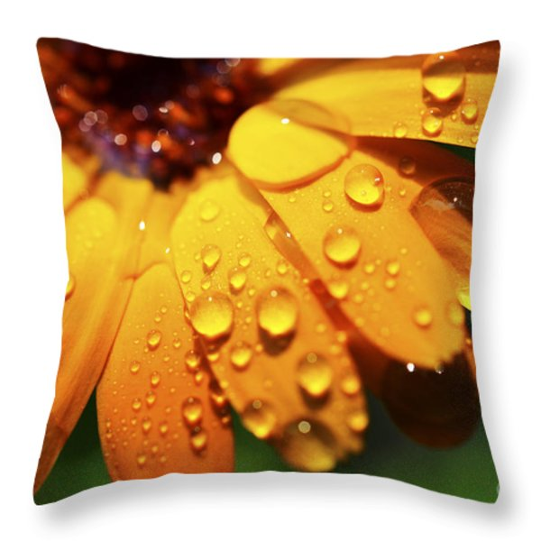Orange Daisy And Raindrops Throw Pillow by Thomas R Fletcher