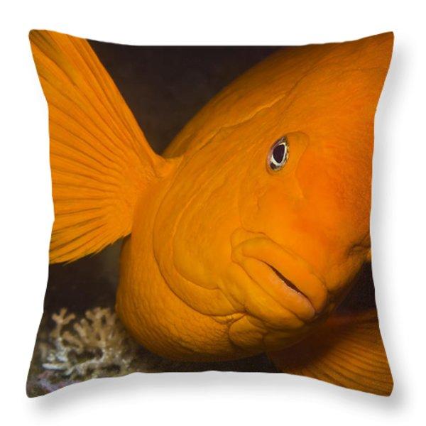 Orange Garibaldi Throw Pillow by Mike Raabe