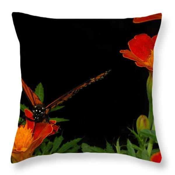 Orange On Orange Throw Pillow by Lydia Holly