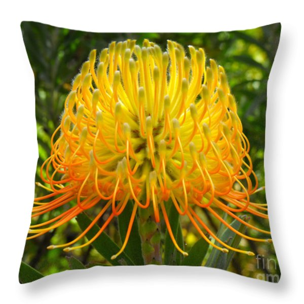 Orange Protea Flower Art Throw Pillow by Rebecca Margraf