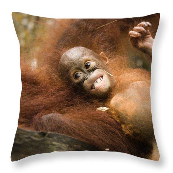 Orangutan Pongo Pygmaeus.  Juvenile Throw Pillow by Tim Laman